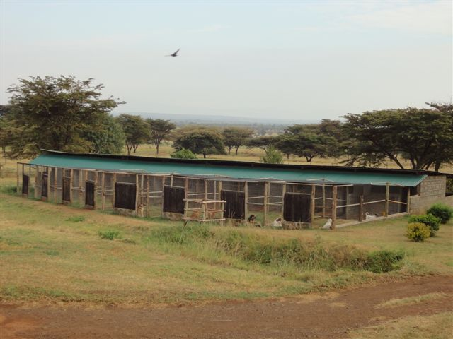kennel-view