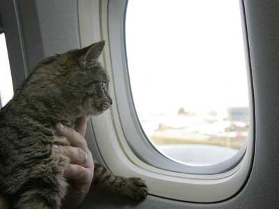 pets-on-a-plane-1